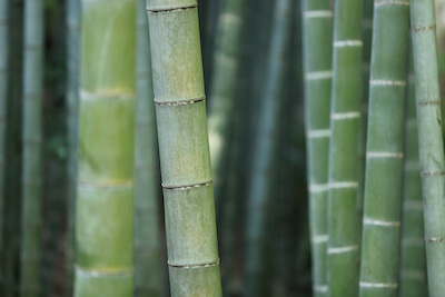 bamboo forest foods