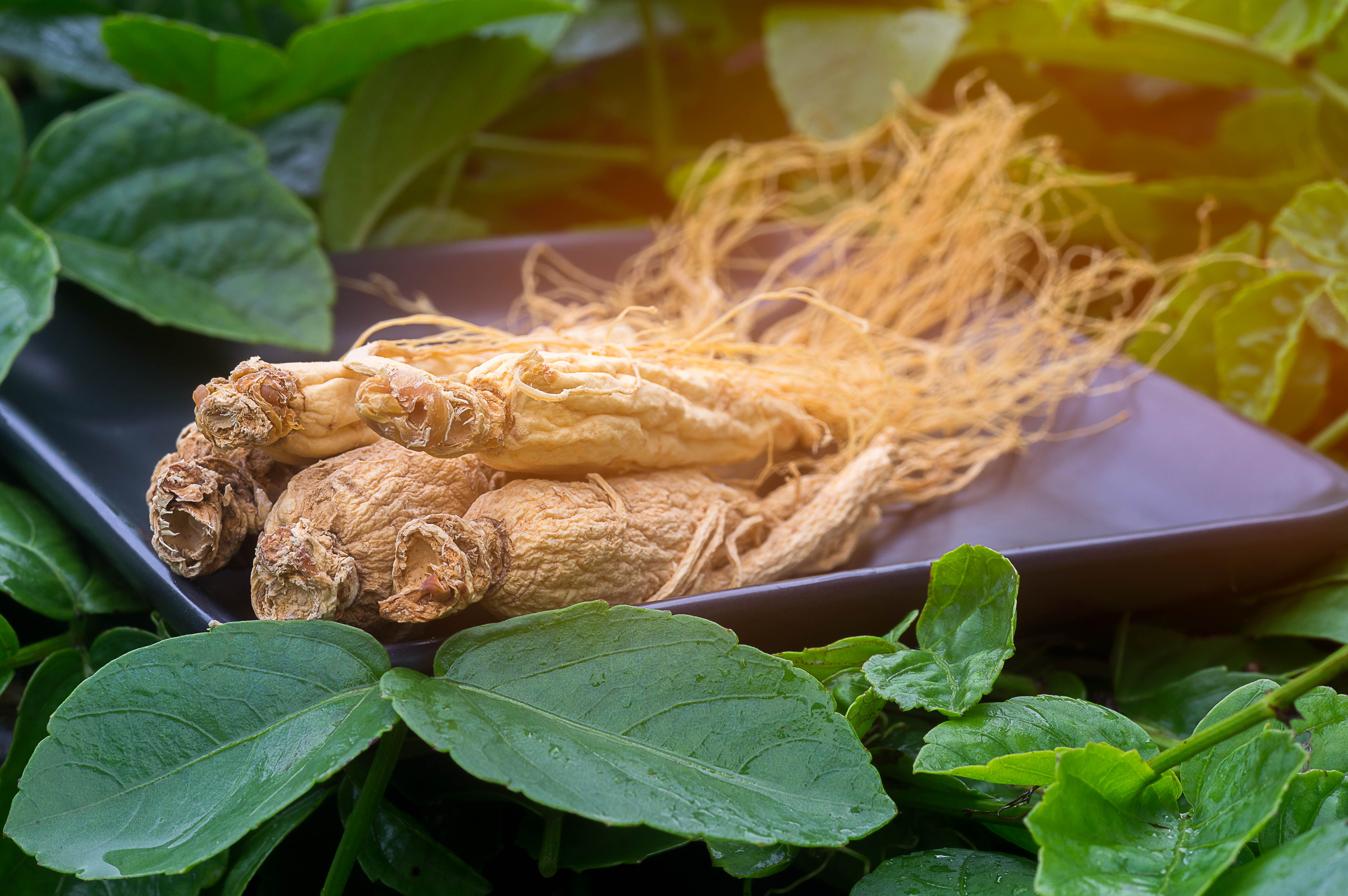 ginseng plate stock